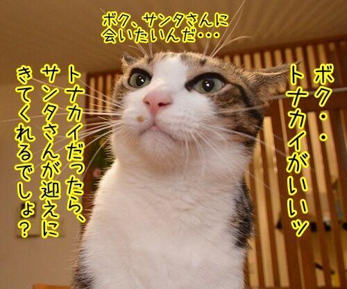 クリスマスにはサンタさんに会いたいの 猫の写真で4コマ漫画 2コマ目ッ