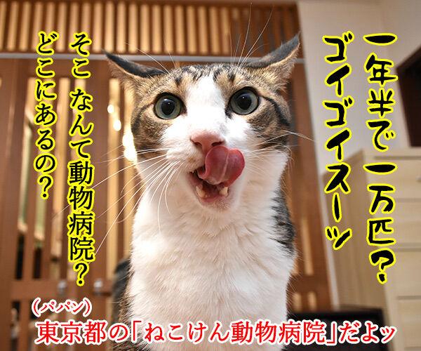 無料で猫の不妊・去勢手術をする動物病院があるんですってッ 猫の写真で4コマ漫画 3コマ目ッ