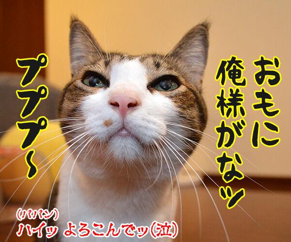 じゃらしのはなし 猫の写真で4コマ漫画 4コマ目ッ