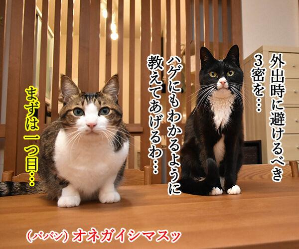 外出時に避けるべき3密とは? 猫の写真で4コマ漫画 1コマ目ッ