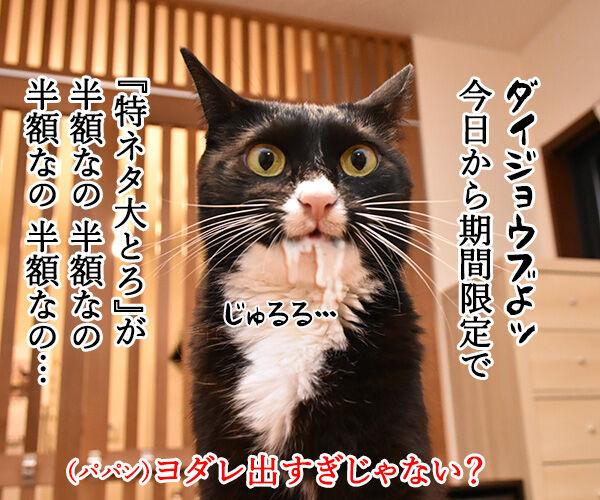 スシローで『大とろ祭』が開催中なのよッ 猫の写真で4コマ漫画 2コマ目ッ