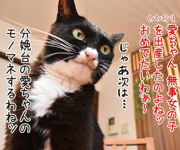 福原愛ちゃんがママになったんですってッ 猫の写真で4コマ漫画 3コマ目ッ