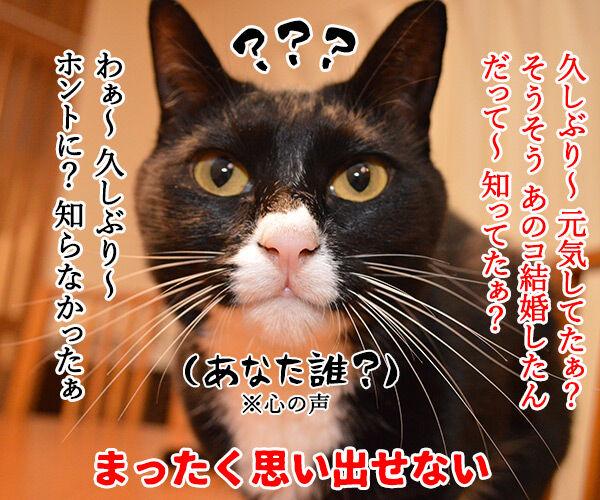成人式あるある 猫の写真で4コマ漫画 2コマ目ッ