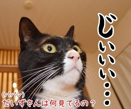 なに見てるの? 猫の写真で4コマ漫画 3コマ目ッ