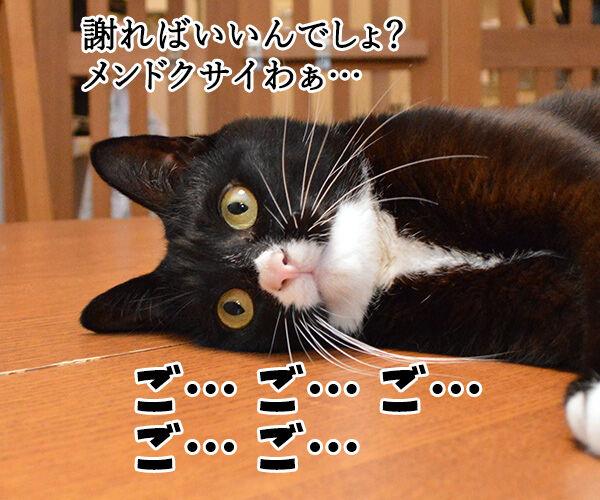 ちゃんと謝らなきゃダメッ 猫の写真で4コマ漫画 3コマ目ッ