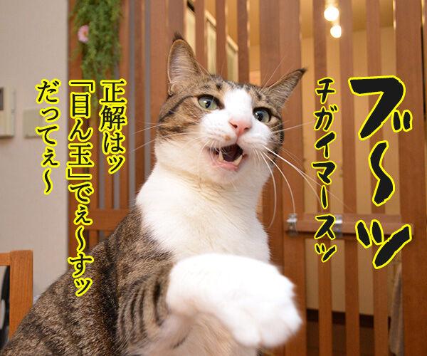 そこのハゲ、答えたまえ 猫の写真で4コマ漫画 2コマ目ッ