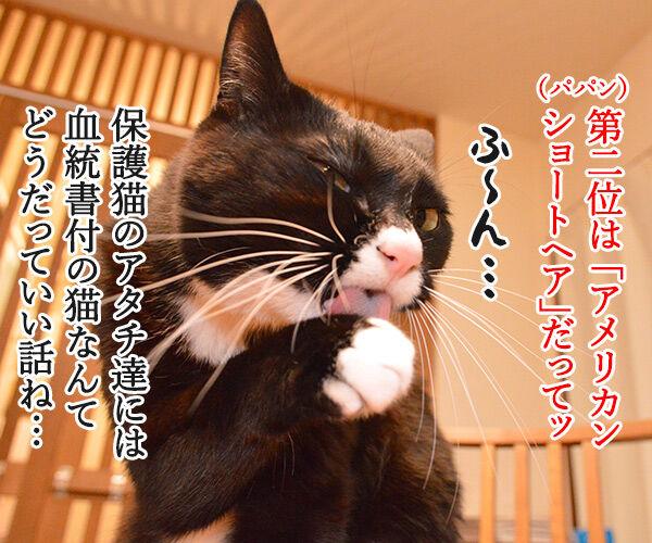 猫の種類 人気ランキング 猫の写真で4コマ漫画 2コマ目ッ