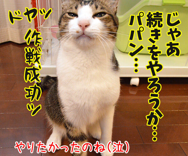 アドバイス 猫の写真で4コマ漫画 4コマ目ッ