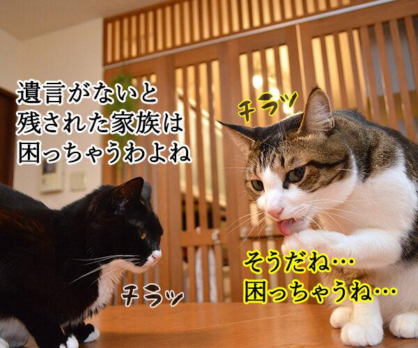 遺言を書く人が増えてるんですってッ 猫の写真で4コマ漫画 2コマ目ッ
