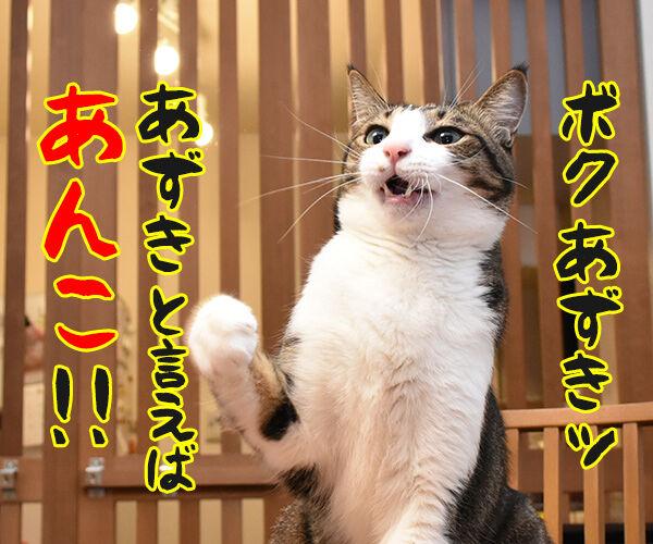 6月16日は『和菓子の日』なんですってッ 猫の写真で4コマ漫画 2コマ目ッ