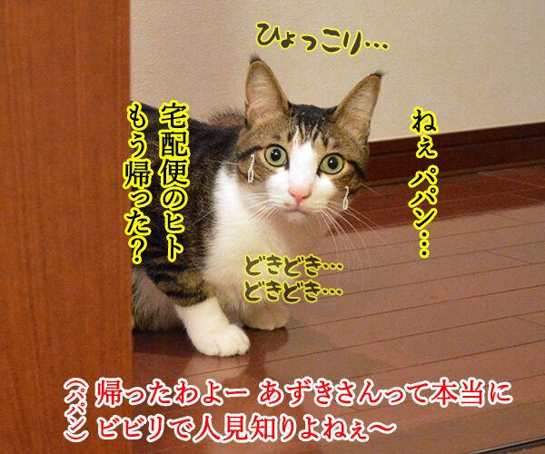 ビビリで人見知りなあずきさんは… 猫の写真で4コマ漫画 3コマ目ッ