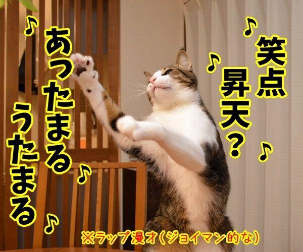 「笑点」新司会は春風亭昇太さんに決定ですってッ 猫の写真で4コマ漫画 3コマ目ッ