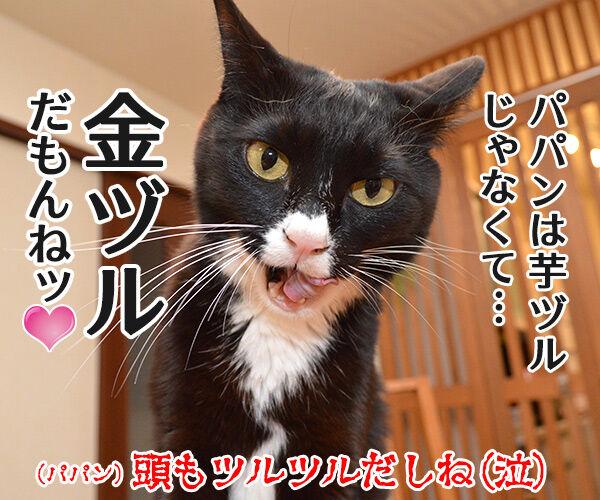 パパンの帰りが遅いから 猫の写真で4コマ漫画 4コマ目ッ