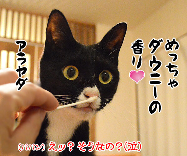 ちょっと実験してみたの 猫の写真で4コマ漫画 4コマ目ッ