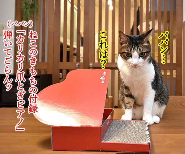 ねこのきもちの付録は『カリカリ 爪とぎ ねこピアノ』なのッ 猫の写真で4コマ漫画 1コマ目ッ