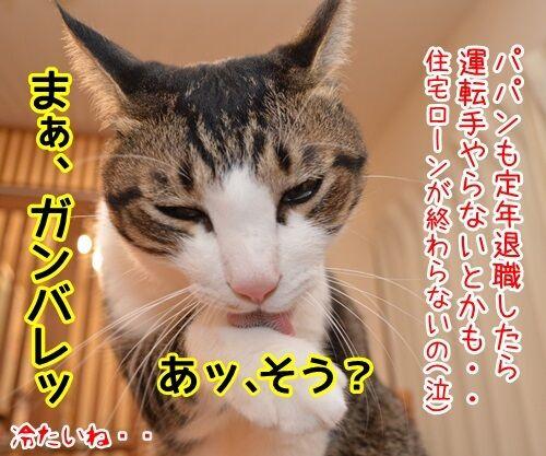 タクシー運転手のハナシ 猫の写真で4コマ漫画 2コマ目ッ