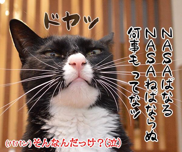 きょうは「宇宙の日」なんですってッ 猫の写真で4コマ漫画 4コマ目ッ