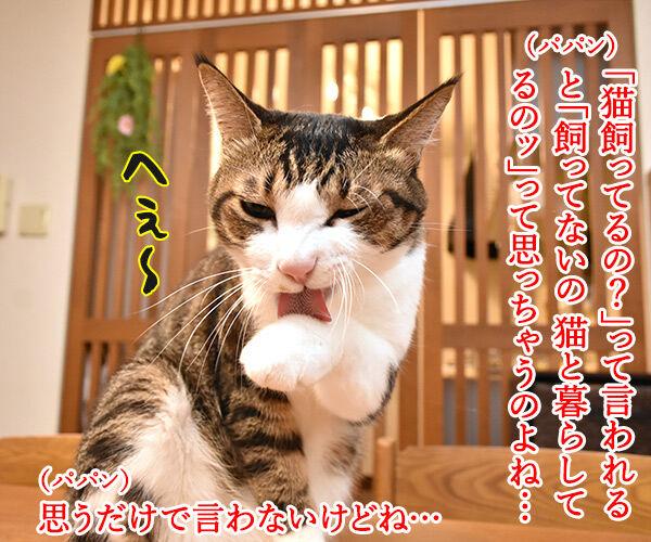 あずきさんとだいずさんは家族だから 猫の写真で4コマ漫画 1コマ目ッ
