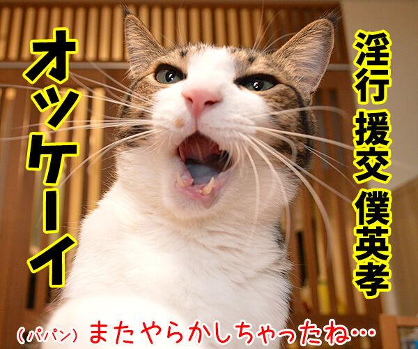 狩野英孝がまたやらかしちゃったね 猫の写真で4コマ漫画 1コマ目ッ