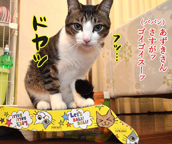 エビキャッチ 其の一 猫の写真で4コマ漫画 3コマ目ッ