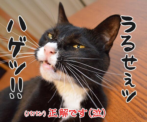 鳴き声でわかる猫のきもち 猫の写真で4コマ漫画 4コマ目ッ