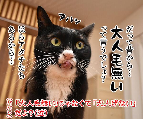パパンみたいなオトナにはなりたくないの… 猫の写真で4コマ漫画 4コマ目ッ