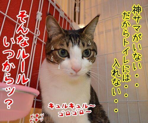 来たなッ 猫の写真で4コマ漫画 4コマ目ッ
