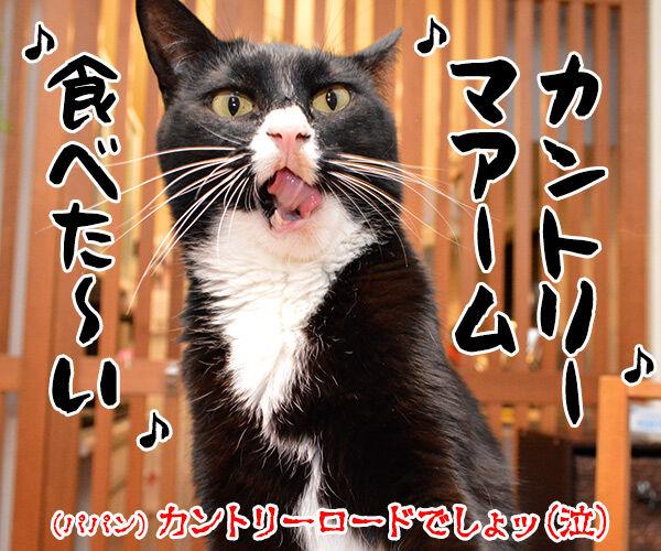 耳をすませば カントリーロード 猫の写真で4コマ漫画 4コマ目ッ