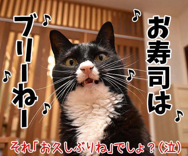 パパン なんだかお寿司が食べたいわぁ~ 猫の写真で4コマ漫画 4コマ目ッ
