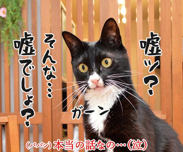 非アルコール性脂肪肝(NASH)になっちゃったの 猫の写真で4コマ漫画 2コマ目ッ
