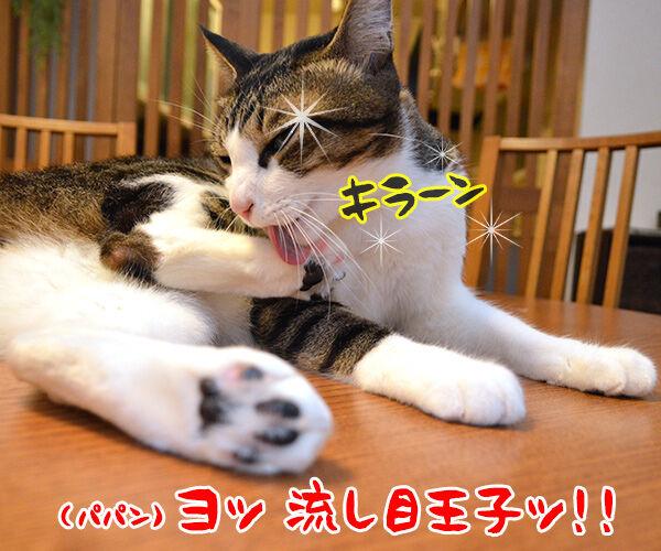 流し目王子に飽きちゃったから 猫の写真で4コマ漫画 1コマ目ッ
