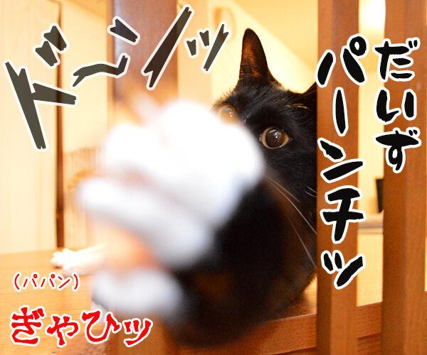 ちょっと来てッ 猫の写真で4コマ漫画 3コマ目ッ