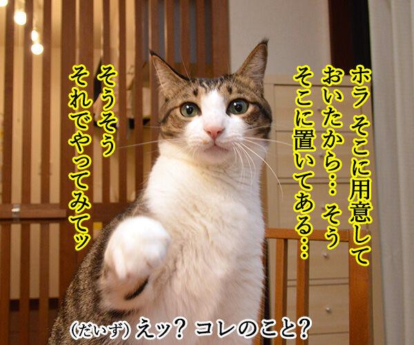 『あたし、ねこ』が変わるってホント? 猫の写真で4コマ漫画 3コマ目ッ
