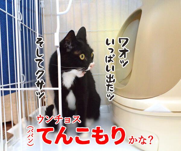 だいずさんがトイレにこもってるのッ 猫の写真で4コマ漫画 3コマ目ッ