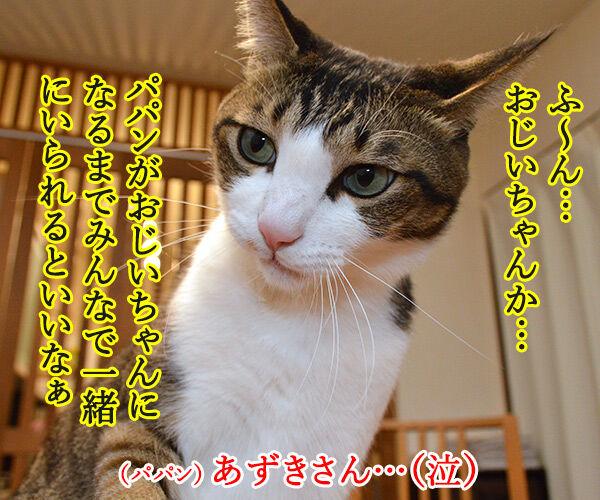 ねことじいちゃん 猫の写真で4コマ漫画 2コマ目ッ
