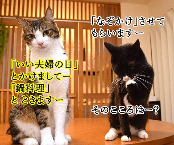 夫婦漫才 ミカとジョージ 其の三 猫の写真で4コマ漫画 1コマ目ッ