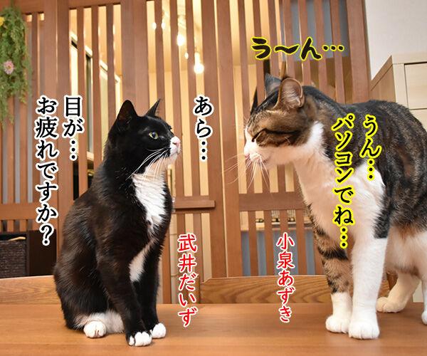 ハズキルーペのCMって知ってる? 猫の写真で4コマ漫画 3コマ目ッ