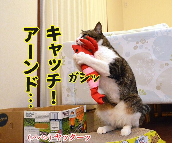キャッチ アンド… 猫の写真で4コマ漫画 2コマ目ッ