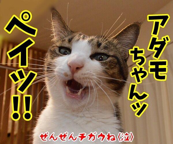 『笑点』大喜利の新メンバー決定!! 猫の写真で4コマ漫画 4コマ目ッ