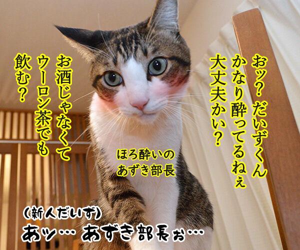 新入社員の歓迎会あるある 猫の写真で4コマ漫画 3コマ目ッ