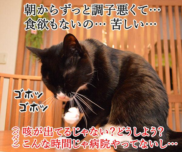 カラダがだるいの 猫の写真で4コマ漫画 2コマ目ッ