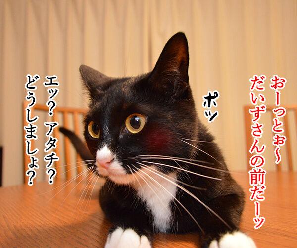 ねるとん 其の一 猫の写真で4コマ漫画 1コマ目ッ