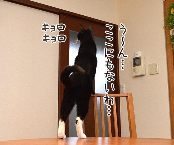 さがしもの 猫の写真で4コマ漫画 2コマ目ッ