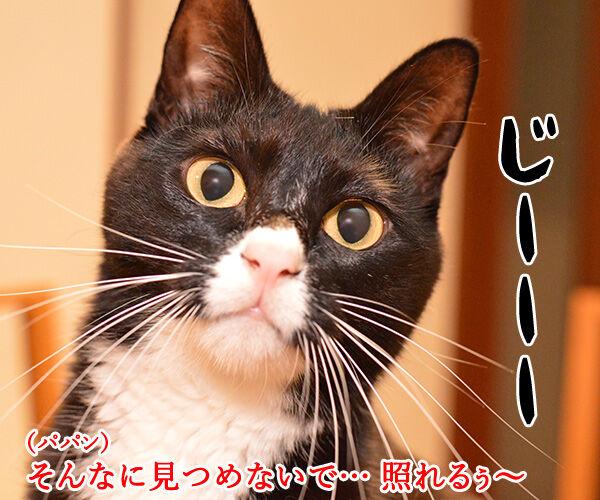 パパンを見るとあのCMを思い出す 猫の写真で4コマ漫画 1コマ目ッ