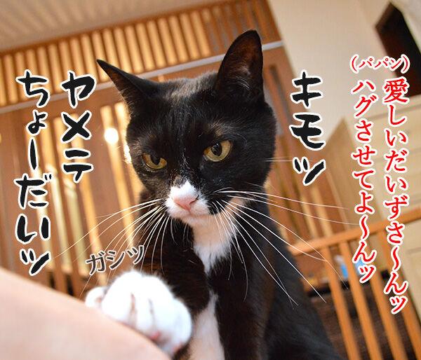愛しくてハグしたいのよッ 猫の写真で4コマ漫画 1コマ目ッ