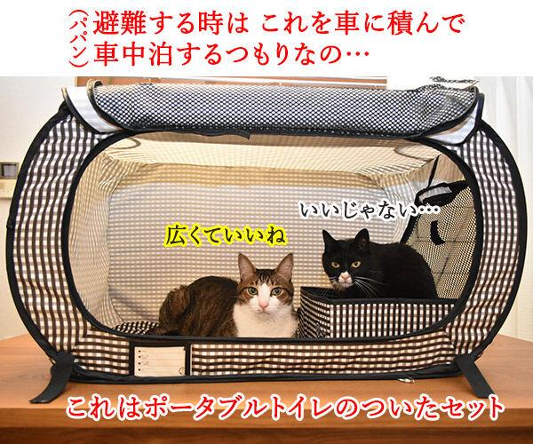 きょうは『防災の日』なんですってッ 猫の写真で4コマ漫画 2コマ目ッ