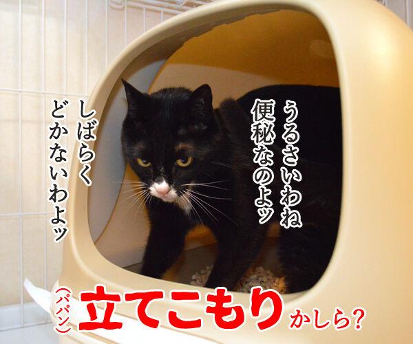 だいずさんがトイレにこもってるのッ 猫の写真で4コマ漫画 2コマ目ッ