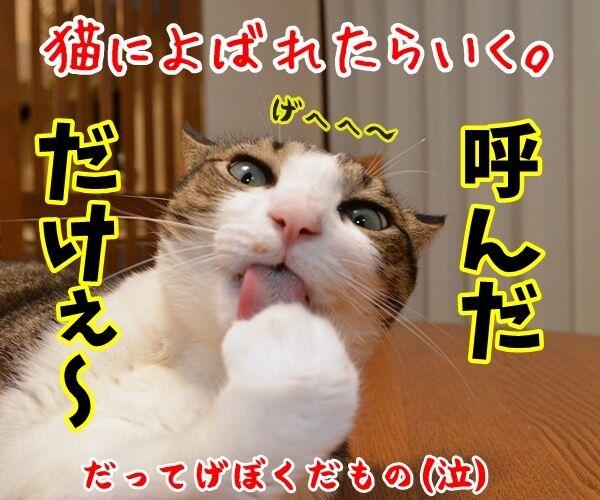 猫なんかよんでもこない。 猫の写真で4コマ漫画 4コマ目ッ