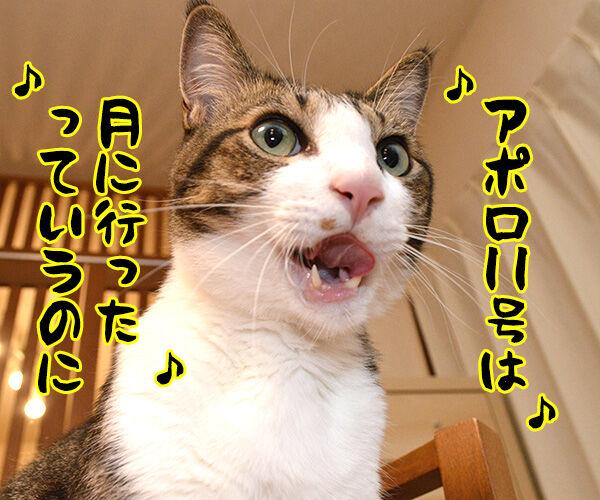 月面着陸の日だから「アポロ」を唄うのよッ 猫の写真で4コマ漫画 2コマ目ッ