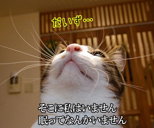千の風になって 猫の写真で4コマ漫画 2コマ目ッ